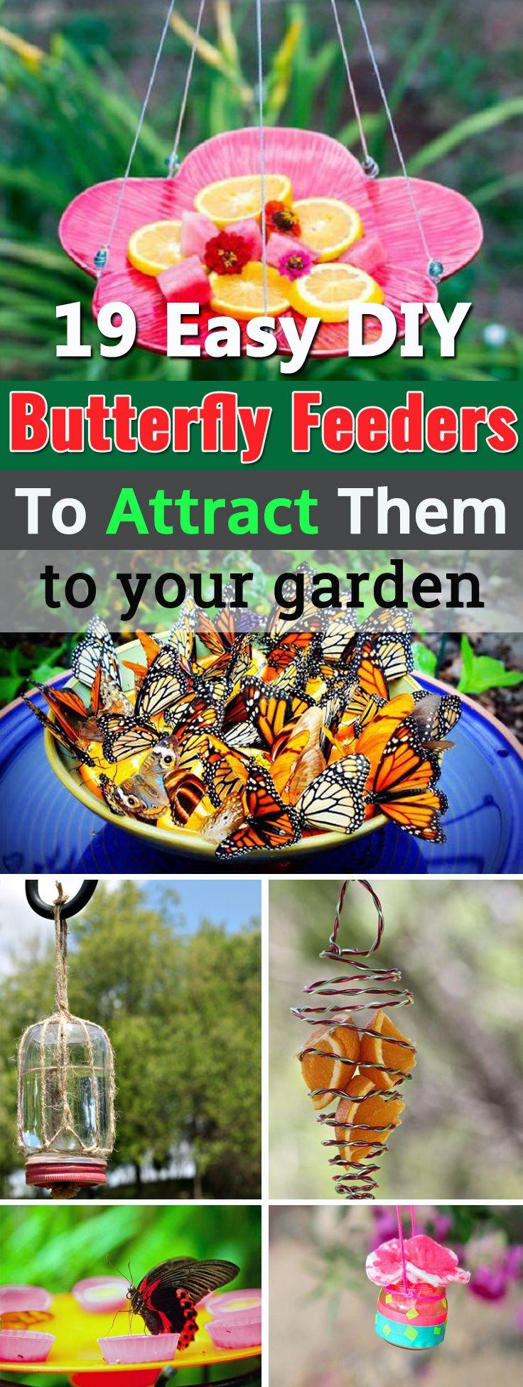 19 Diy Butterfly Feeder Ideas Butterfly Feeder Diy 640 x 480