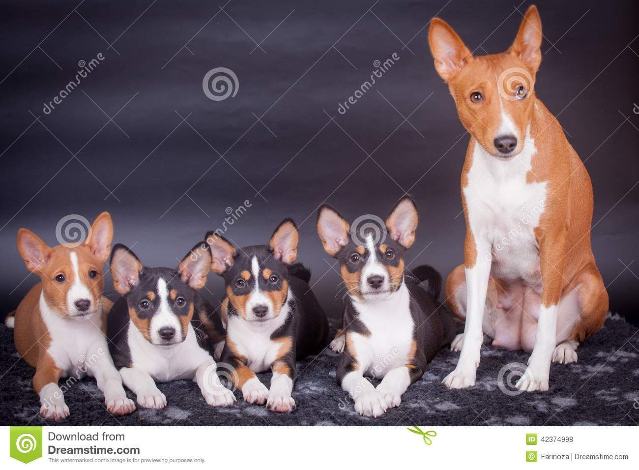 Pin by WLC on Adorable Dogs and More   Basenji puppy ...