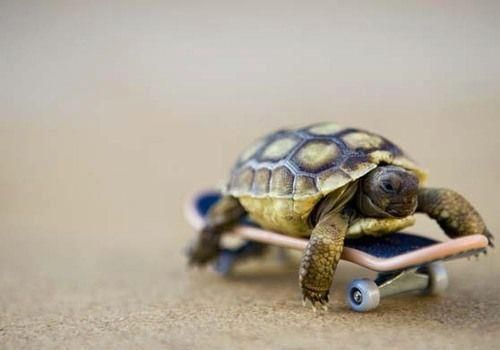 Baby Turtle Rides Skateboard Baby Turtles Cute Animals Funny Animals