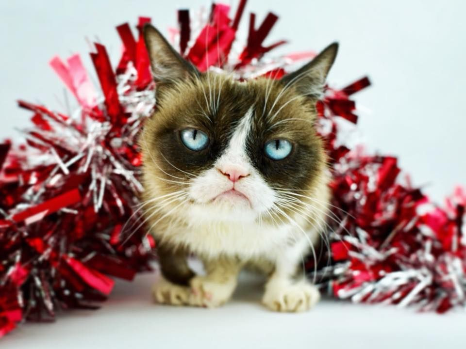 Pin by Lori Packard Keras on Grumpy Cat Grumpy cat humor