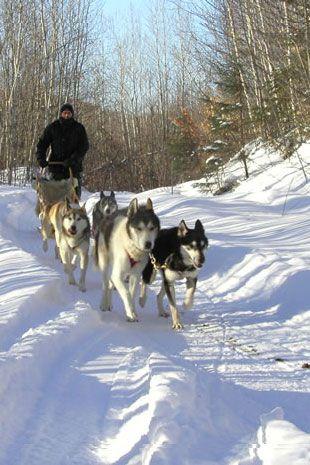 Cdngetaway In 2019 Snow Dogs Winter Scenery Snow