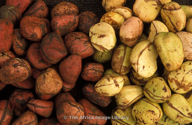 kola nuts, mild narcotic stimulant popular in West Africa