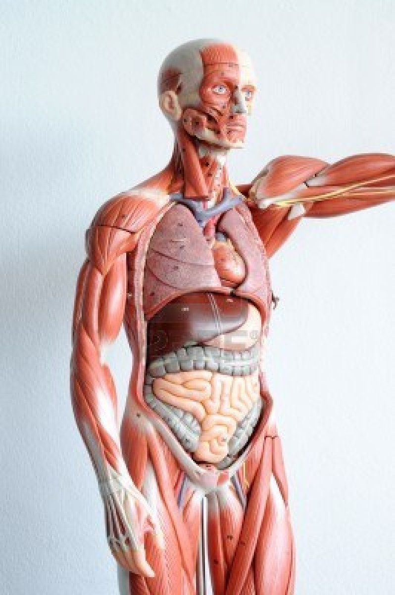 Study Anatomy and Physiology in Animated 3D | Animated Anatomy 3D ...