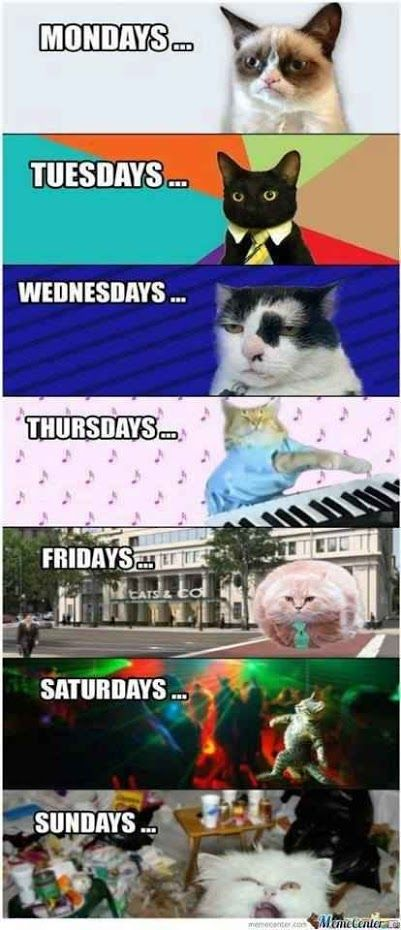 Days Of The Week Maria T Lovelymt Grumpy Cat Humor Grumpy Cat Funny Animal Pictures