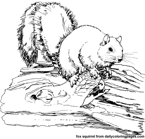 Texas Fox Squirrel Animal Coloring Pages Png 500 480 Pixels Animal Coloring Pages Zebra Coloring Pages Farm Animal Coloring Pages