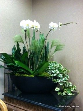 Large Indoor Planters - Foter | Container Gardening | Pinterest ...