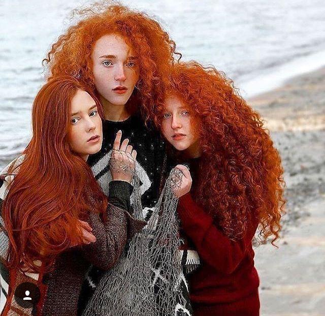 Scottish redhead bush
