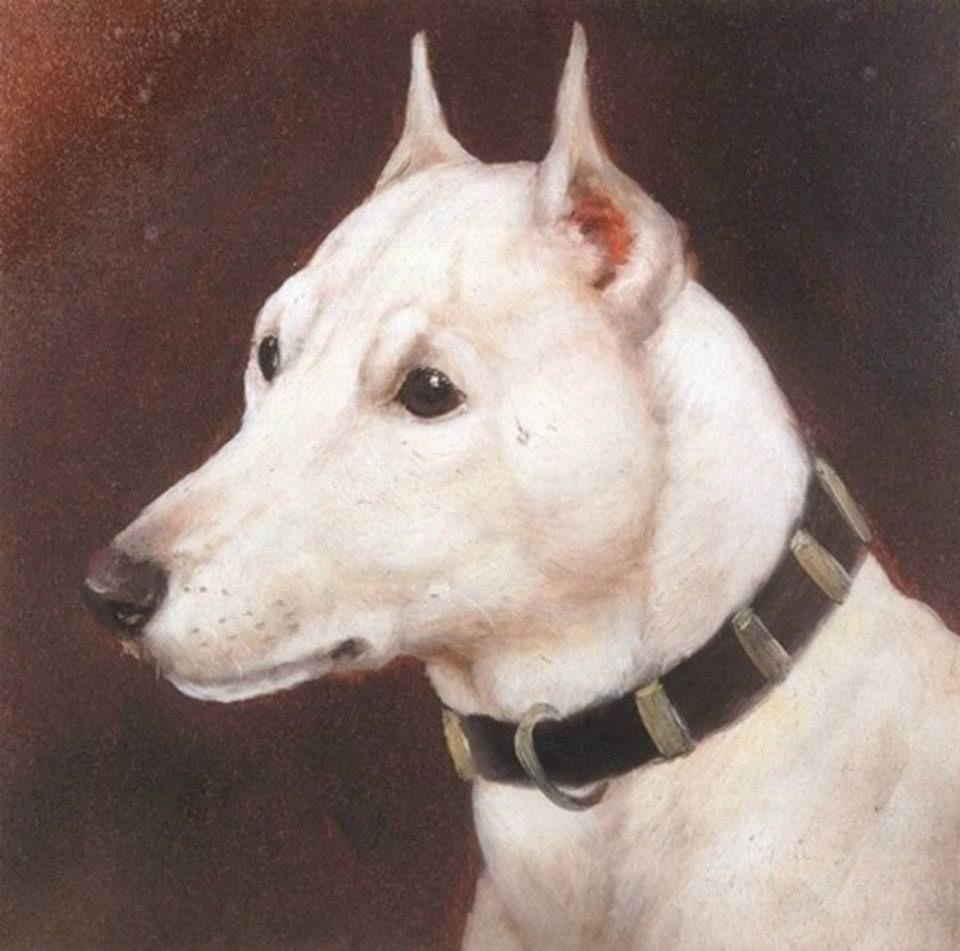 head of bull terrier