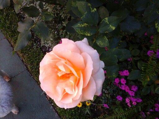 Esta florece mucho