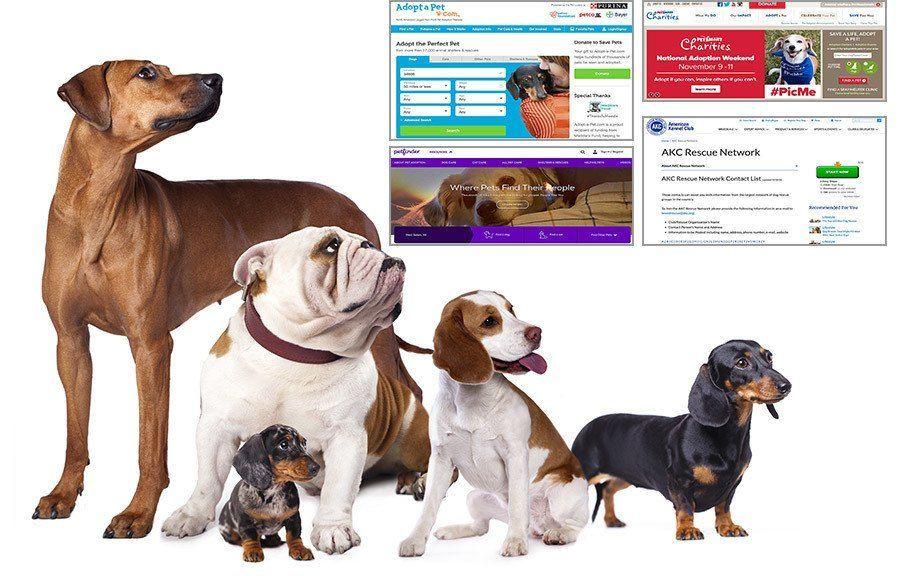 Harsh Dogs Accessories Fashion Dogscorner Dogstuffforpeople Dogs Dog Adoption Dog Benefits