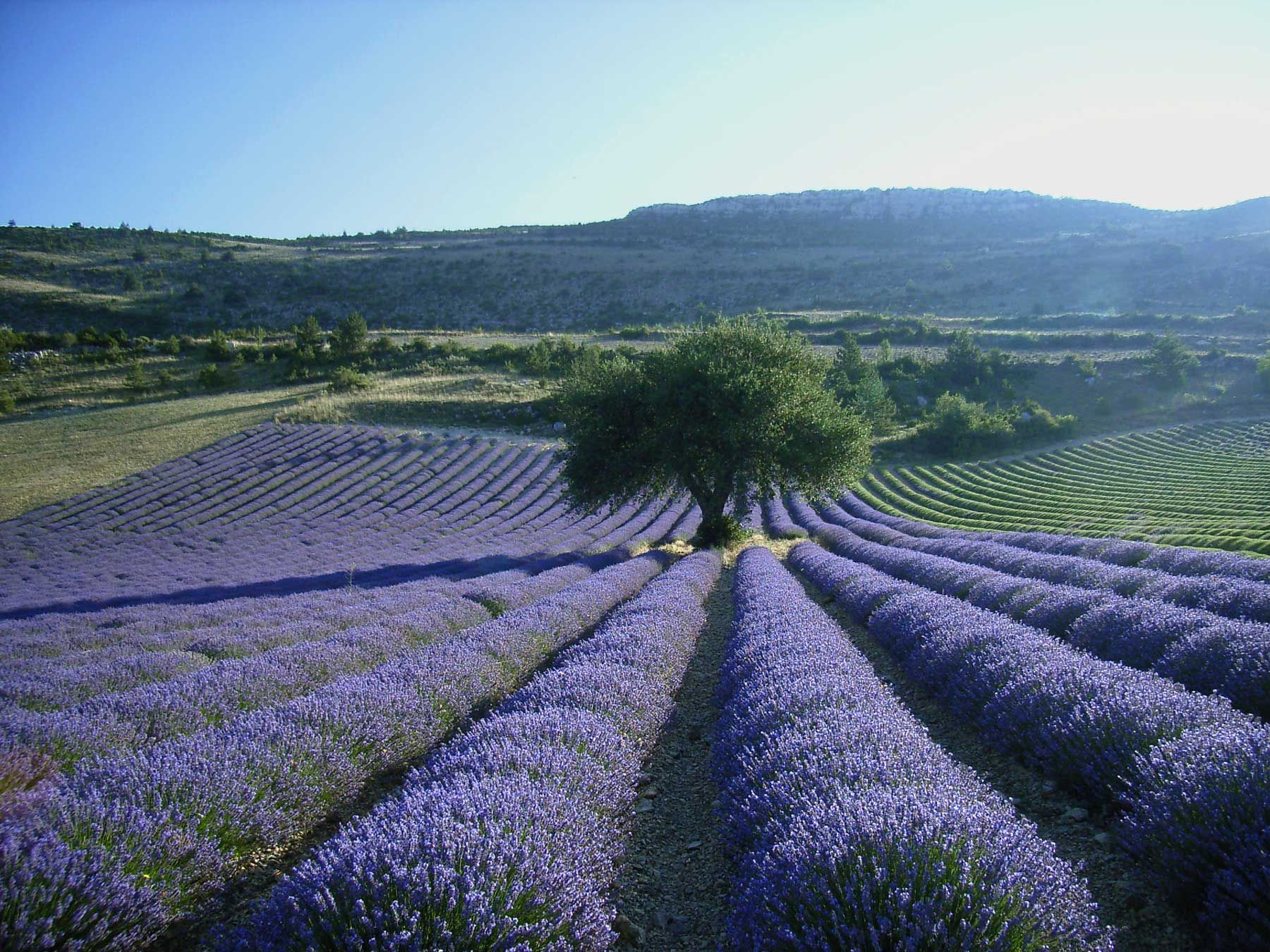 Provence matkaopas by Tripsteri