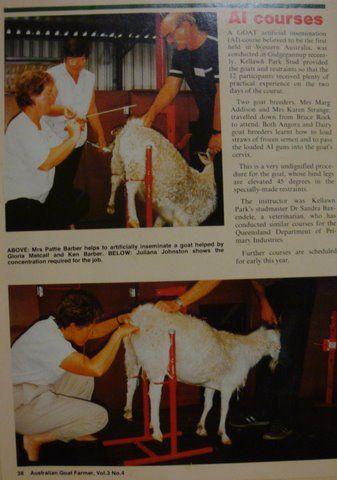 I ran a goat AI course in Western Australia #goatvet   Goats