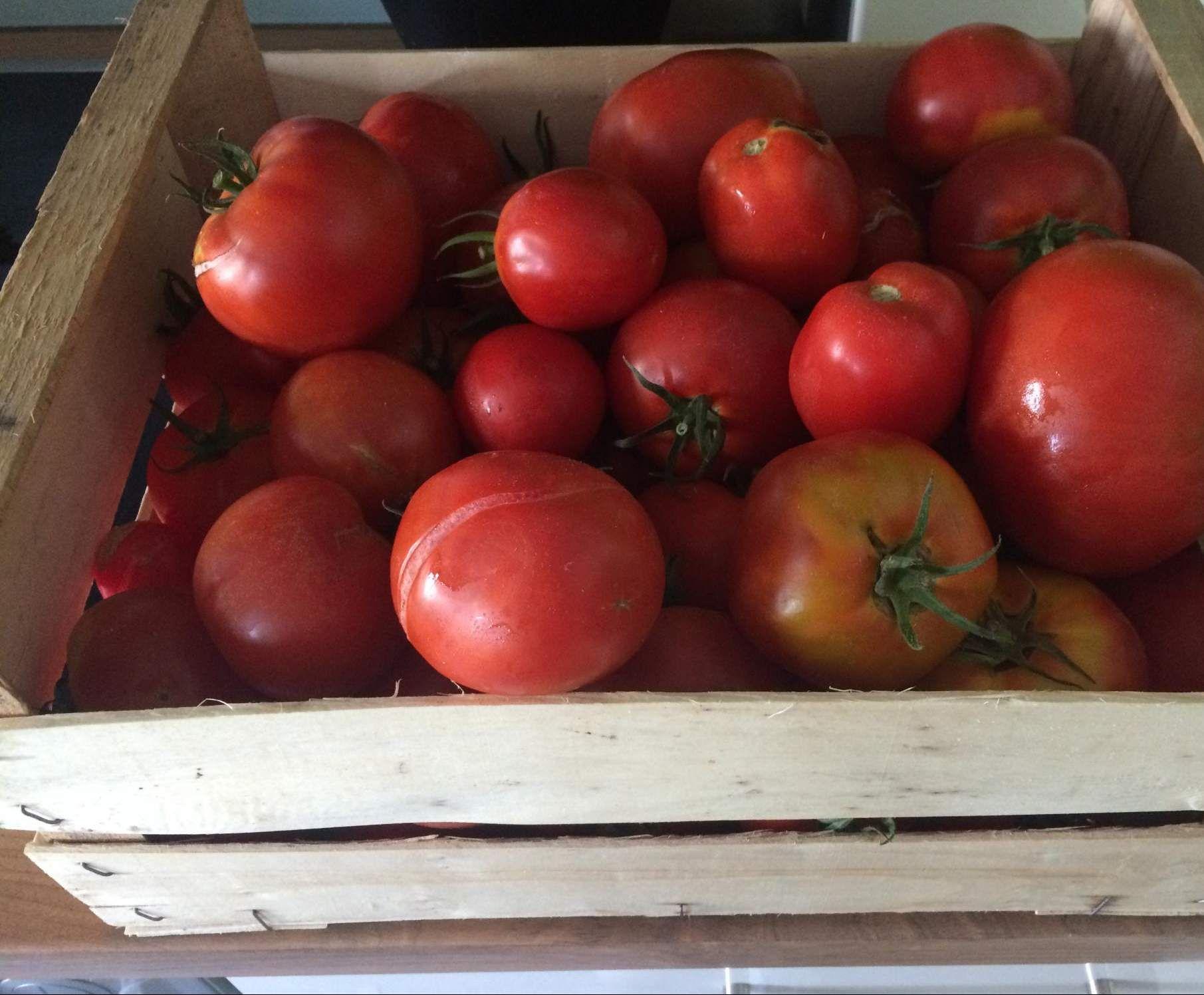 tomatenso e zum einkochen rezept thermomix. Black Bedroom Furniture Sets. Home Design Ideas