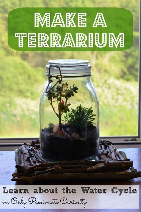 learn about the water cycle make a terrarium cycling learning