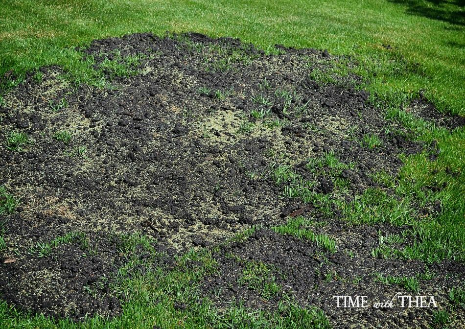 How To Repair Grass Damaged By Dog Urine Time With Thea Diy Lawn Lawn Repair Backyard Landscaping