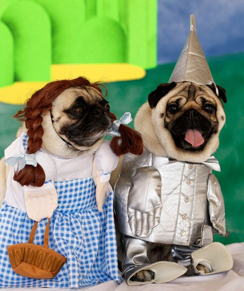 I Ve A Feeling We Re Not In Kansas Anymore Pugs In Costume Pugs