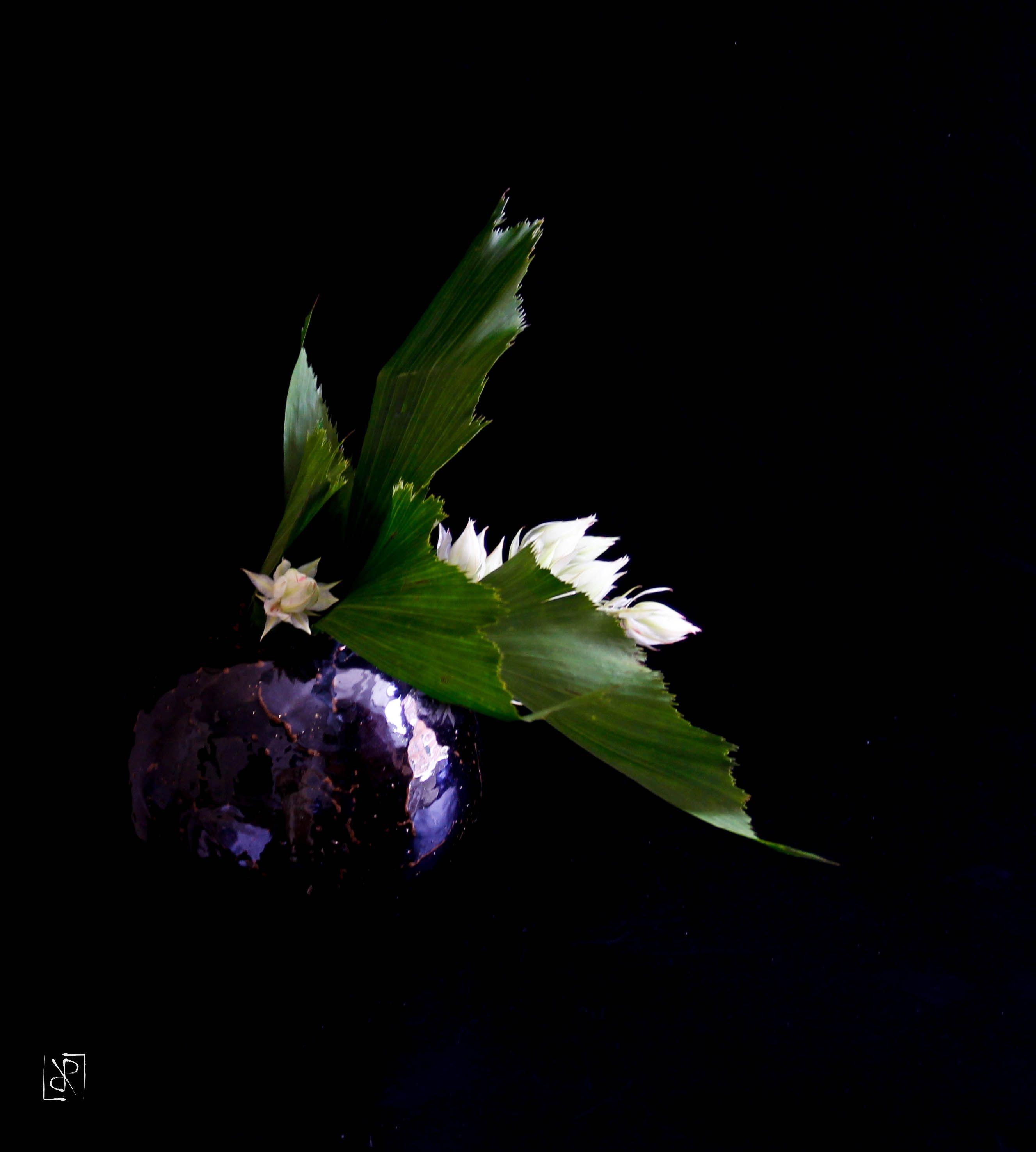 Ikebana di Luca Ramacciotti (vaso di Sebastiano Allegrini)  #ikebana #sogetsu #floral #florist #floralart #floristry