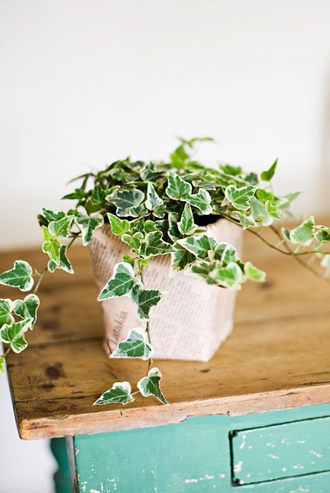 15 Low Maintenance Plants That Will Actually Thrive in Your Office -   17 planting Indoor desk ideas