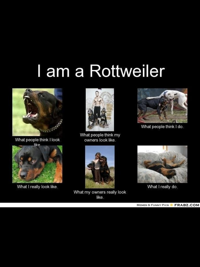 Pin By Wendy Kinion On Rotts Pinterest Rottweiler Dogs And Puppies