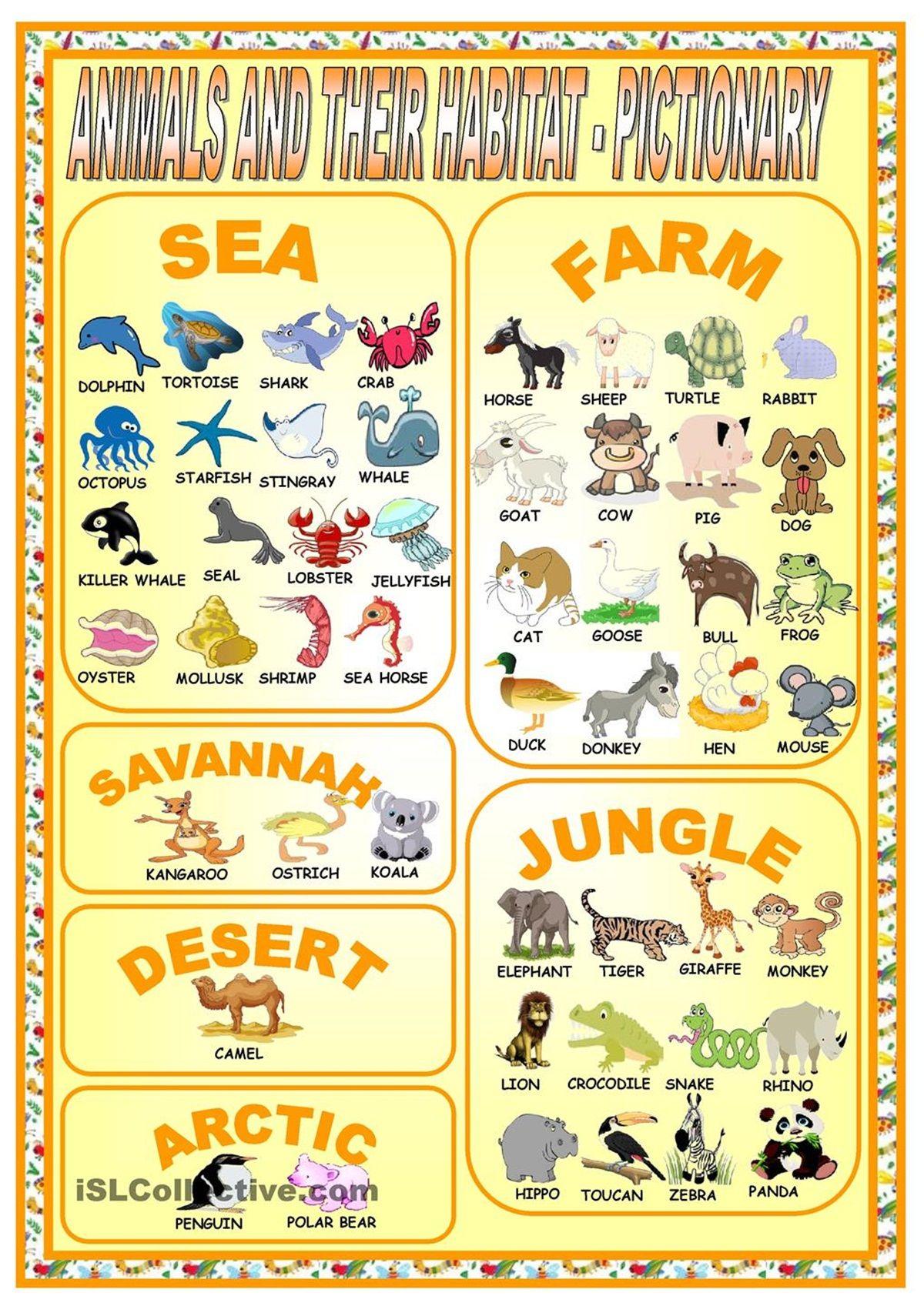 Vocabulary Animals Amp Their Habitat