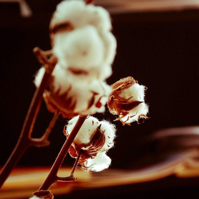 Dessine moi un mouton - Coton -  Flowers