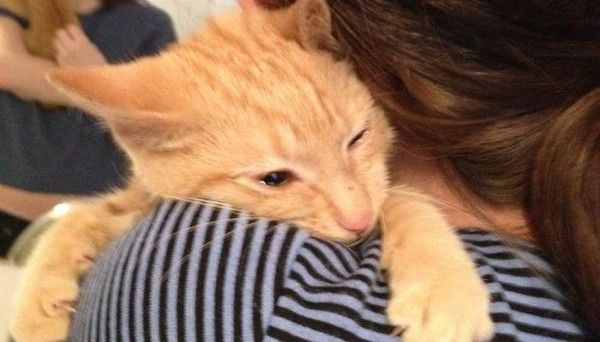 Woman Saves Kitten Despite Being Told He Was Too Feral Right
