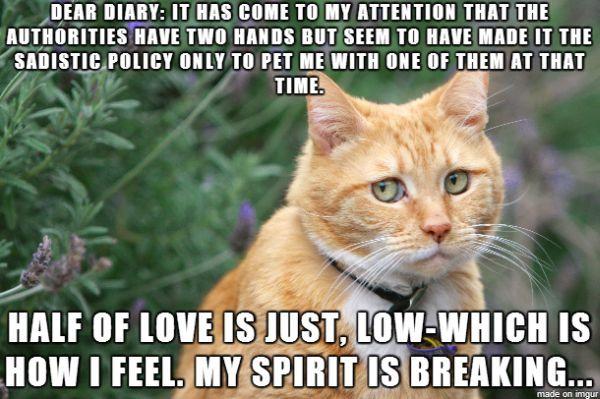 Sad cat diary kitten