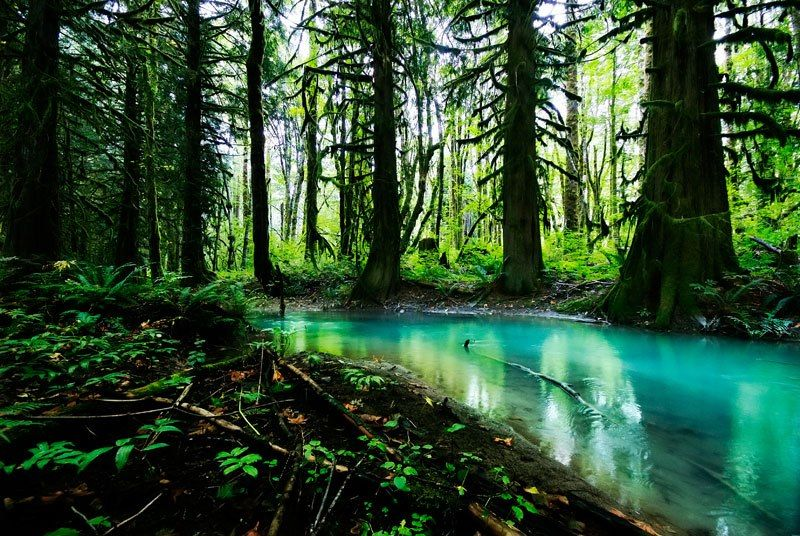 Magical Forest (British Columbia)