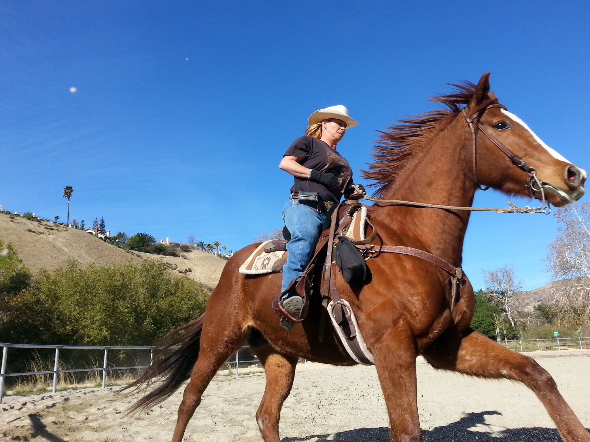 Www Oceanparkranch Com Horseback Riding Horseback Riding Santa