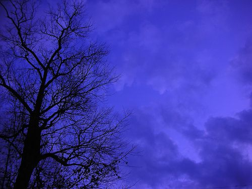 Night tree | Flickr - Photo Sharing!