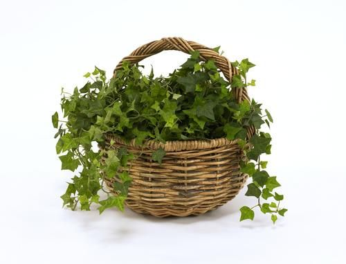 From storing freshly picked fruits to displaying pre-potted trailing greenery, the Apple Basket is a backdrop that grabs a little attention for itself.