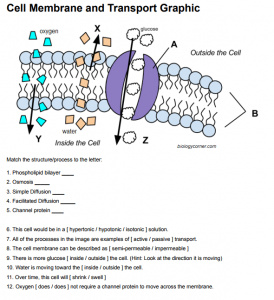 Cell Membrane And Transport Cell Membrane Transport Cells Worksheet Cell Membrane