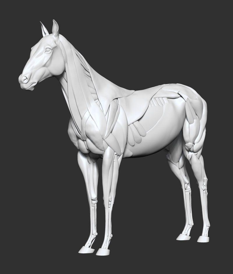 seanGH\'s sketchbook | 3d | Pinterest | Anatomía, Anatomía animal y ...