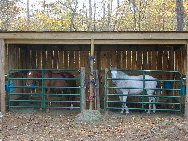How To Build A Miniature Horse Barn Miniature Ponies Miniature Horse Barn Miniature Horse
