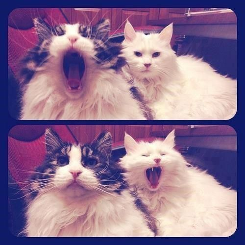 Yawning' is catchin'