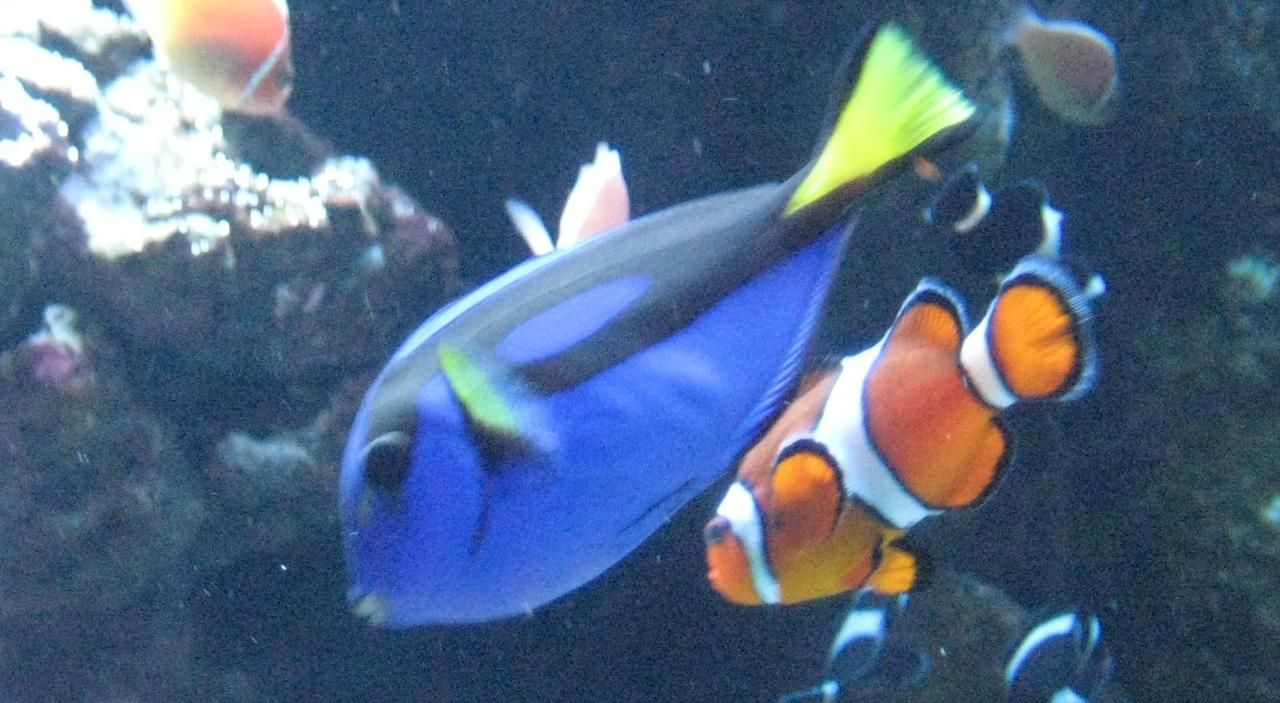 Dory Real Fish Costume Your Character 2013 Pinterest