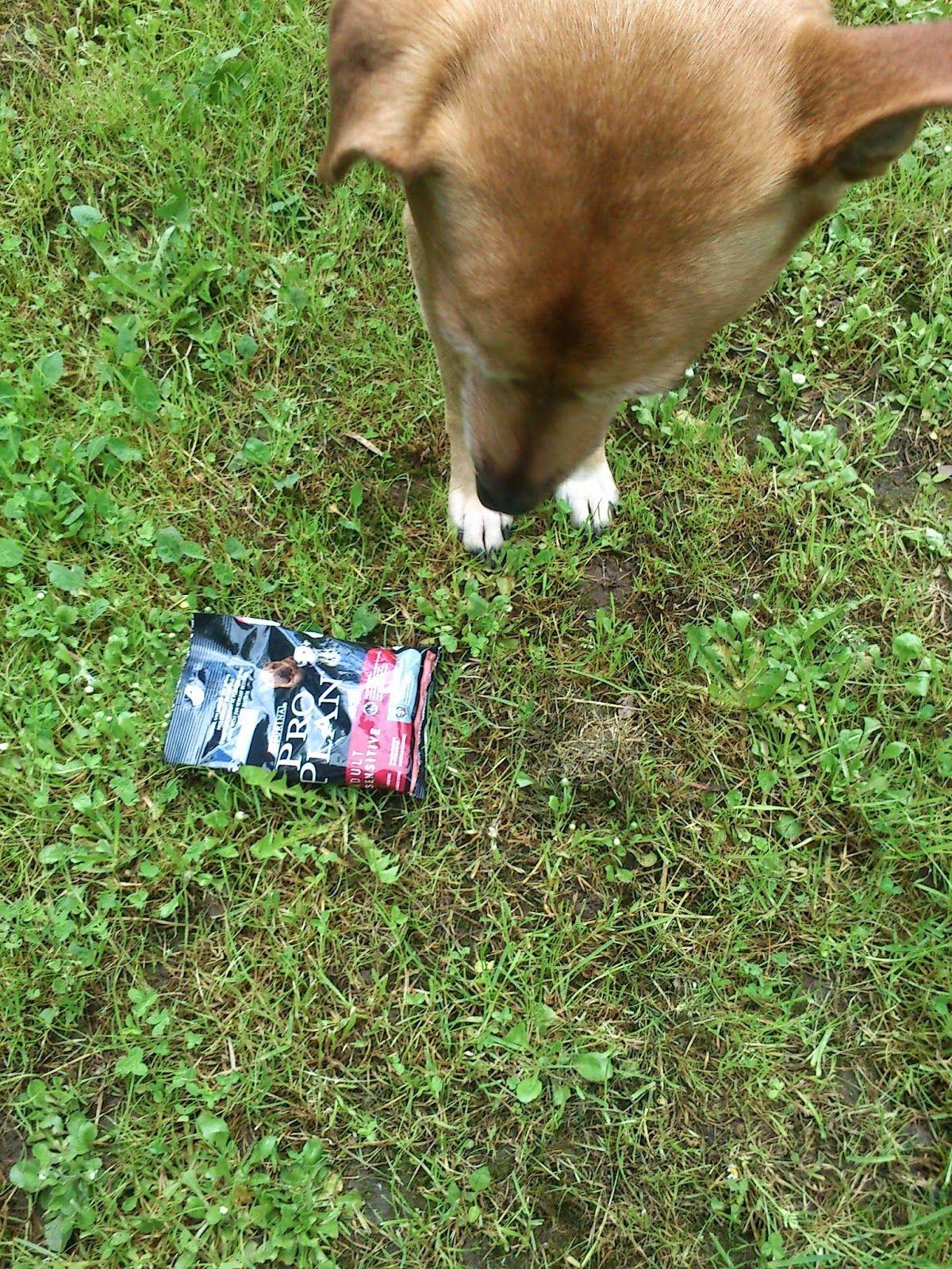 fraukatz-testet: PURINA PRO PLAN für den Hund