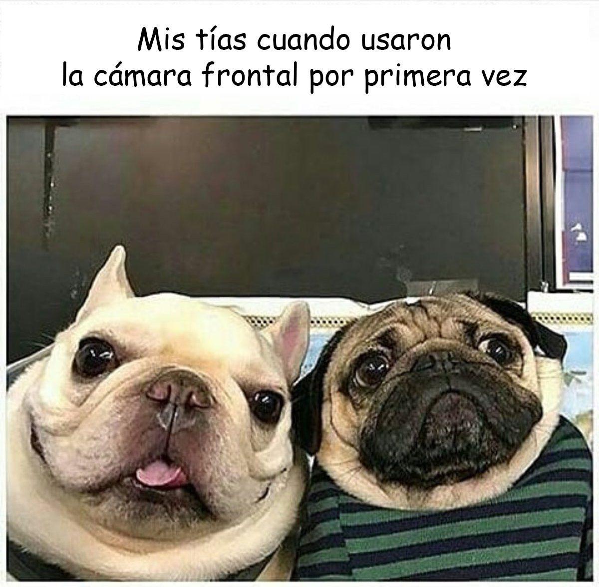 20 Divertidos Memes De Perritos Que Prometen Quitarte Toda La Tristeza Memes Perros Memes De Perros Chistosos Chistes De Perros