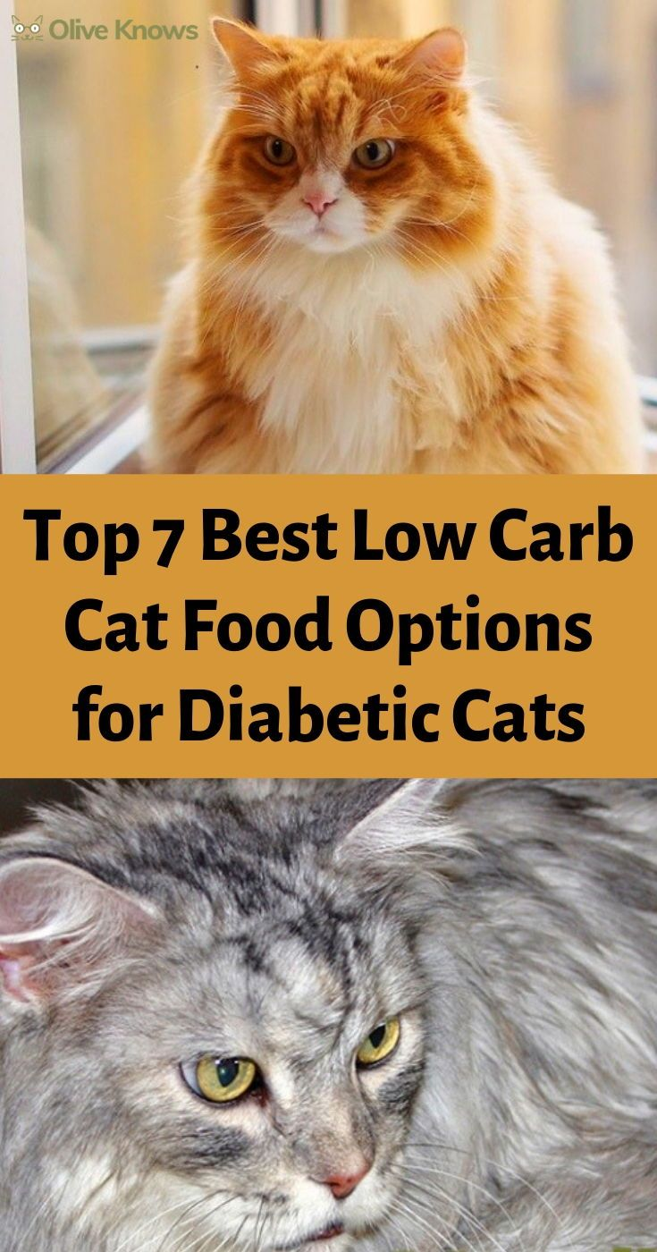 Top 7 Best Low Carb Cat Food Options for Diabetic Cats
