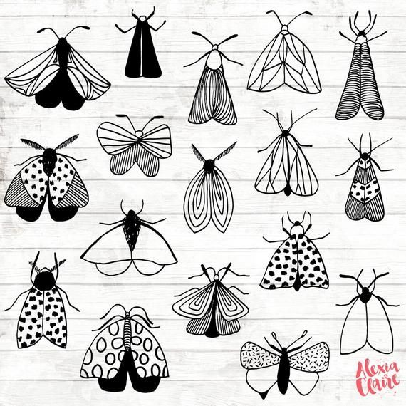 Moth Doodle Clipart 27 Hand Drawn Moths Cliparts Bugs Logo | Etsy