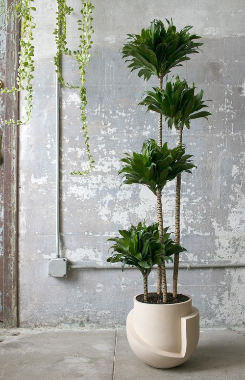 A sculpture in itself, this ceramic floor planter is sized for an indoor tree…
