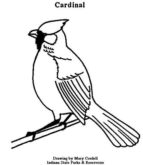 Cardinal 477x550 Pixels