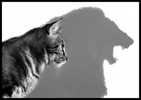 What Matters Most Is How You See Yourself Cats Cast Cats Animals