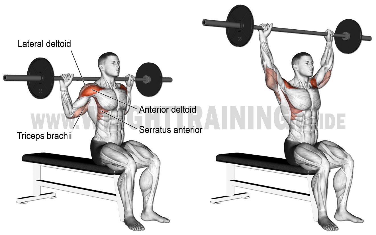Behind The Neck Barbell Overhead Press Exercise