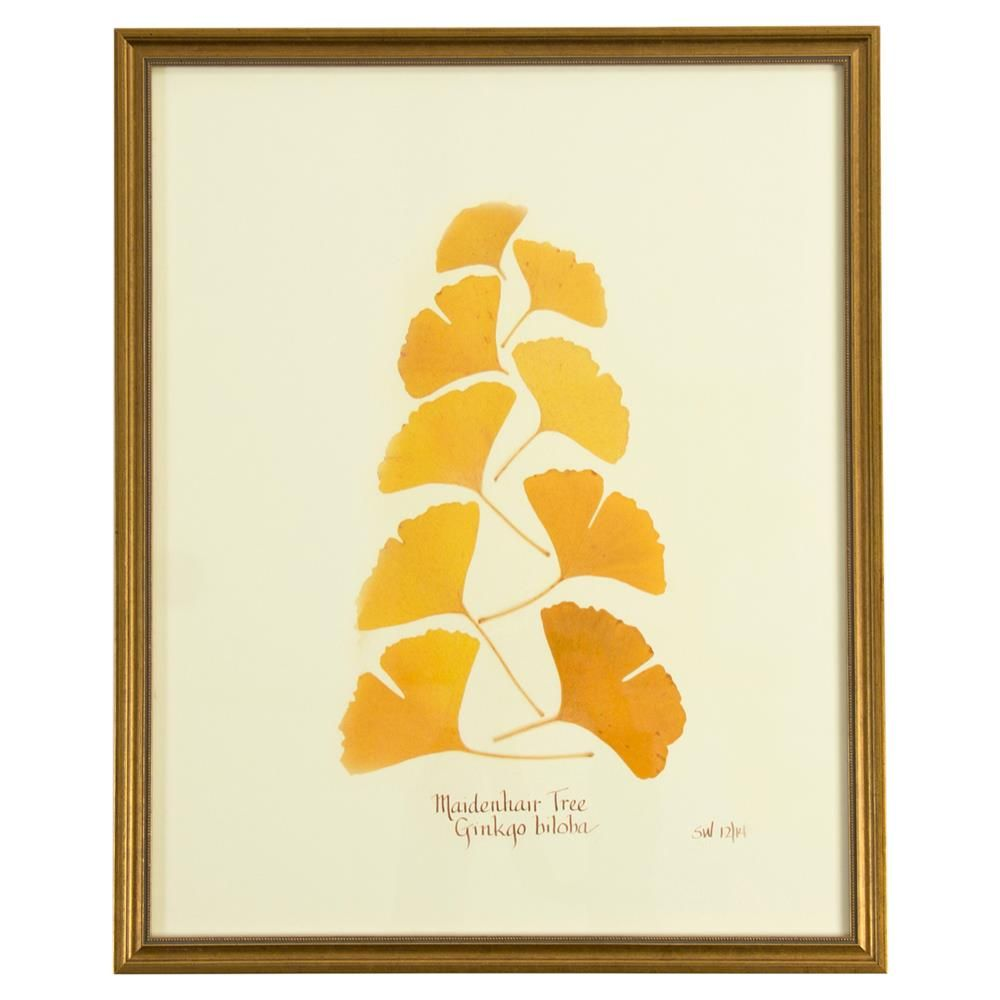 French Ginkgo Biloba Print Botanical Framed Wall Art | Art & Mirrors ...