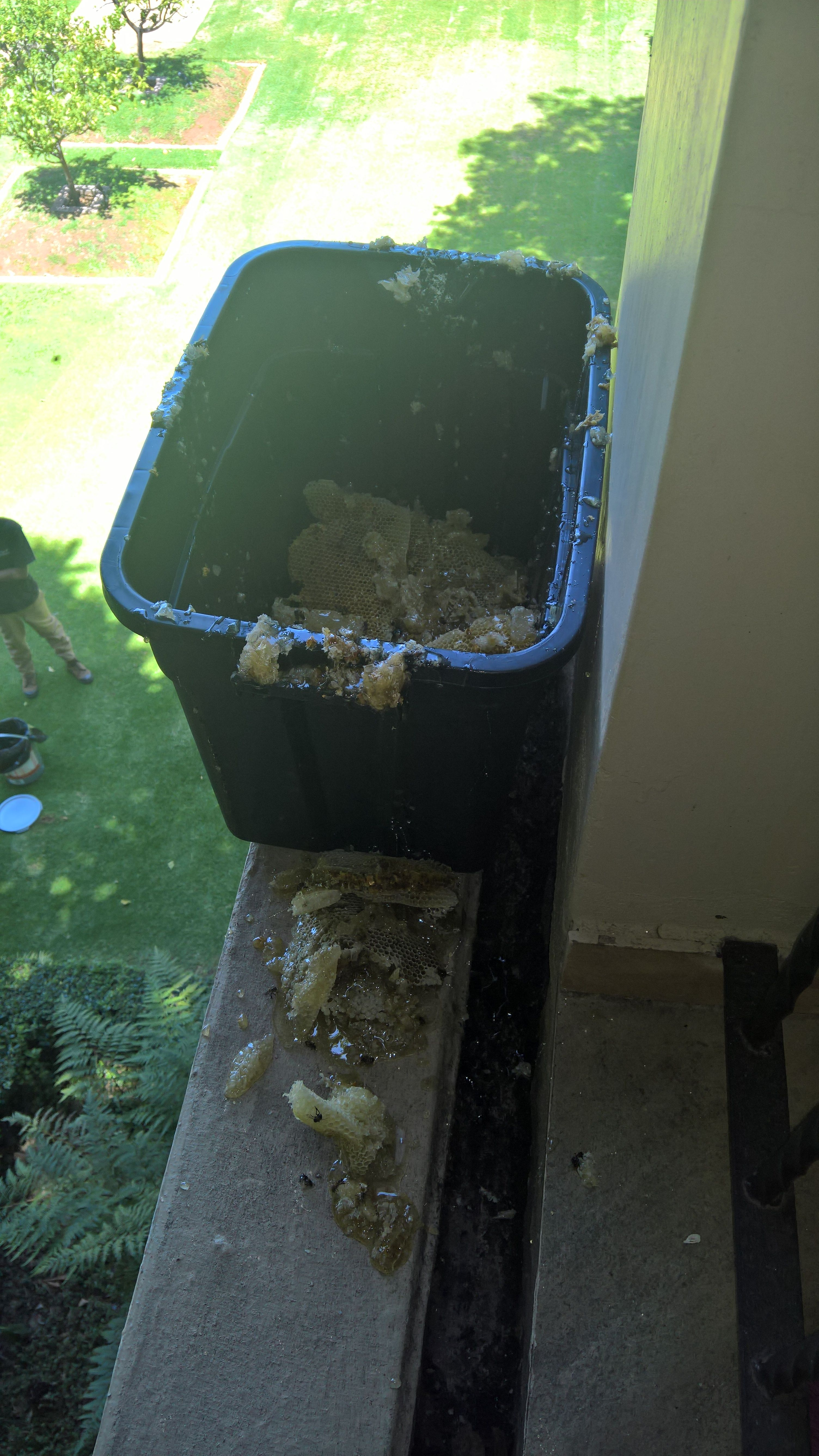 Bee removal in johannesburg removing the honey combs bee