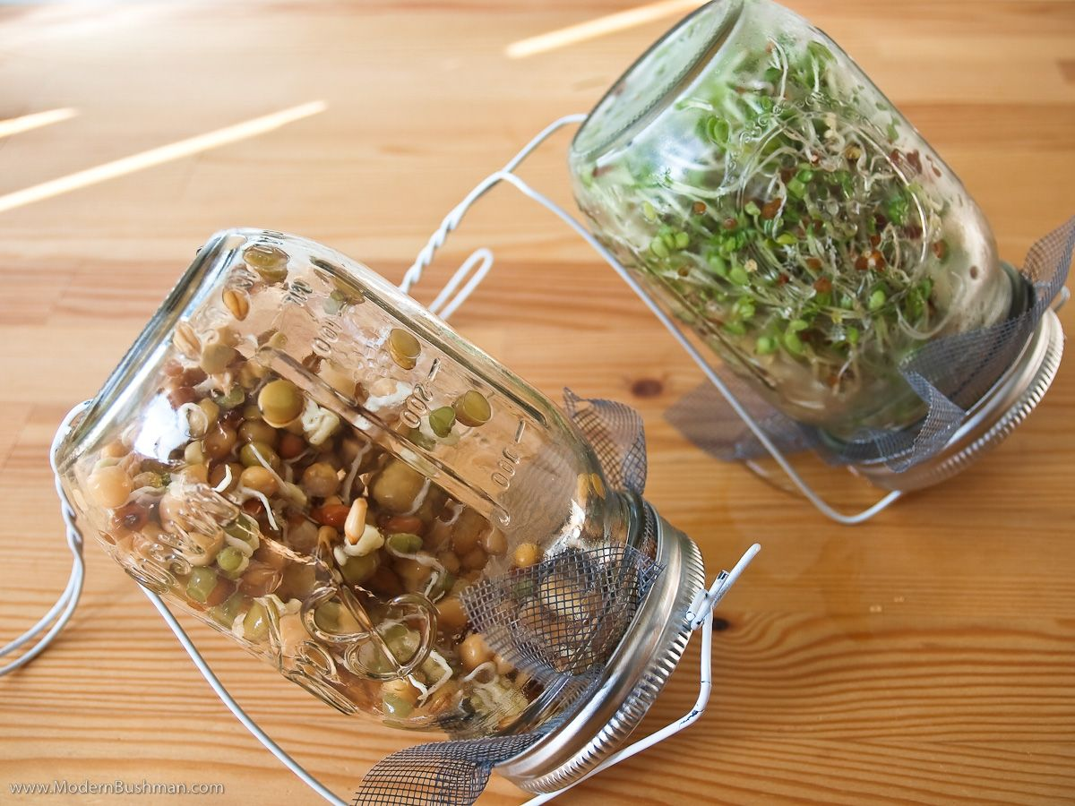 Kitchen Garden Sprouter Diy Sprouting Kit How Does My Garden Grow Pinterest Jars