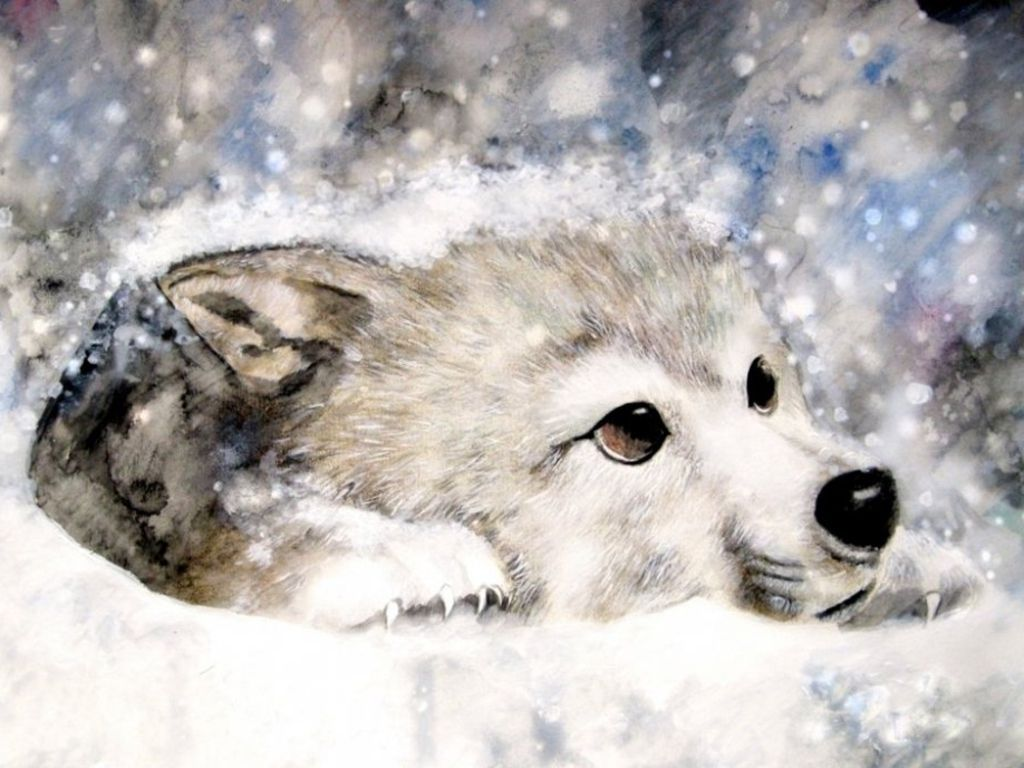 Fanpop Fan Clubs For Everything What Are You A Fan Of Baby Wolves Snow Wolf White Wolf Dog