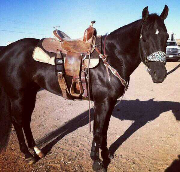 Slick By Design 3 Quarter Horse A Breed All Its Own Pinterest