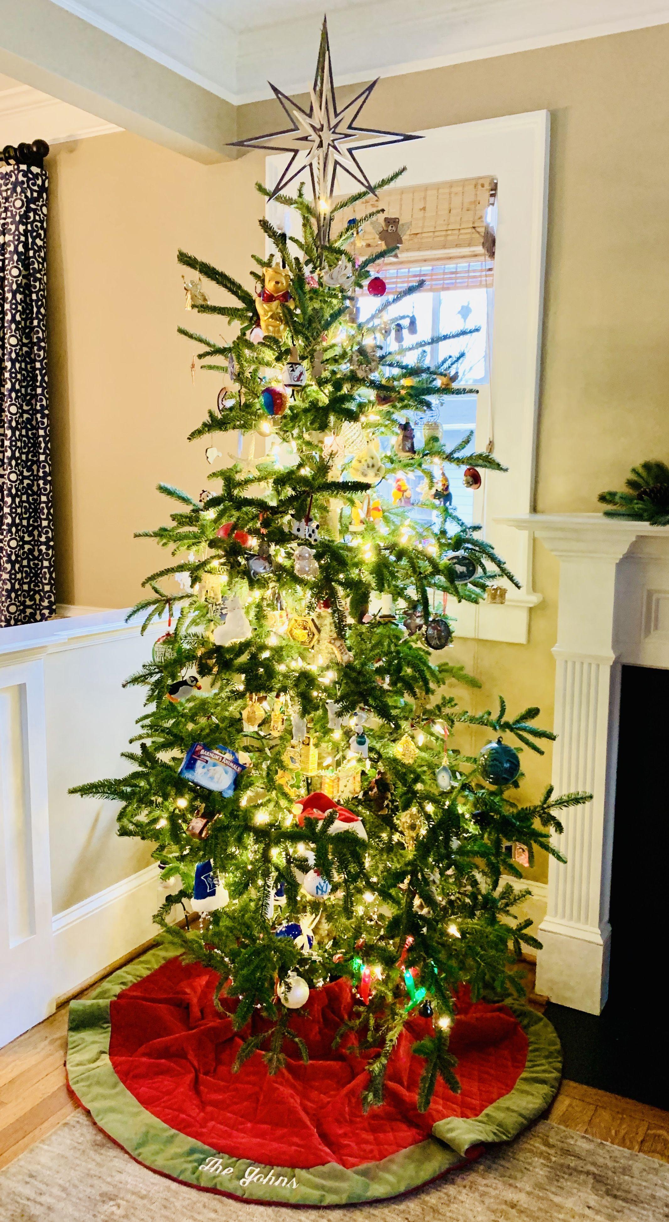 Frasier Fir | Seasonal decor, Holiday decor, Christmas tree